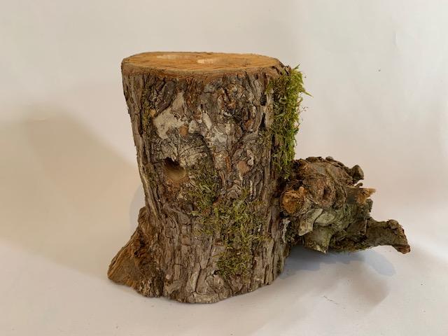 c-wood-L-052326