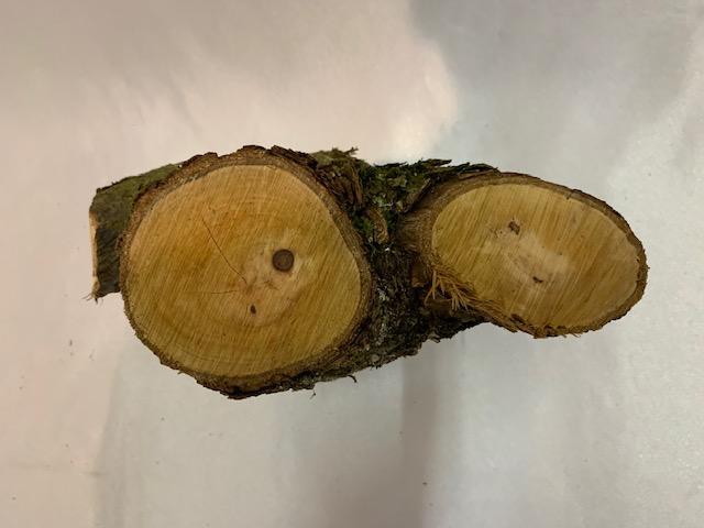 c-wood-L-171916