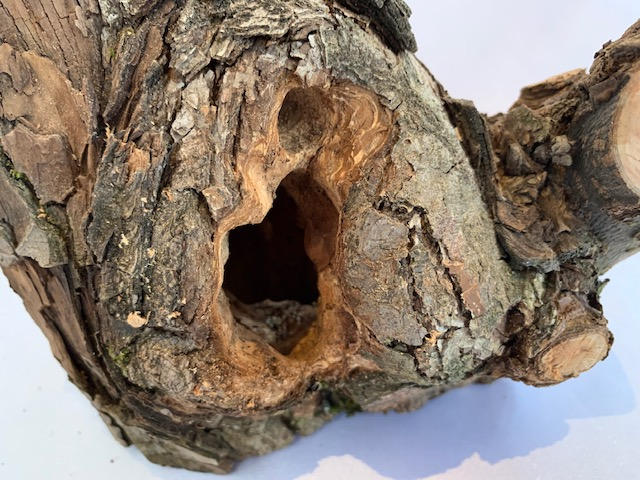 c-wood-k-181105