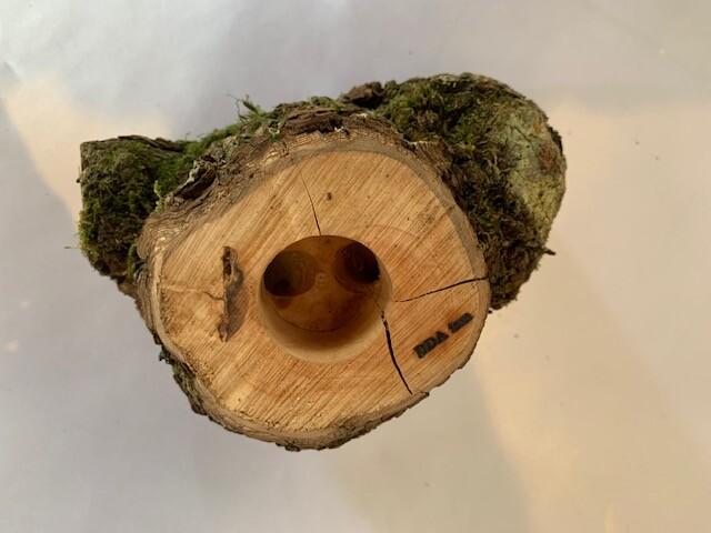 c-wood-L-7021612