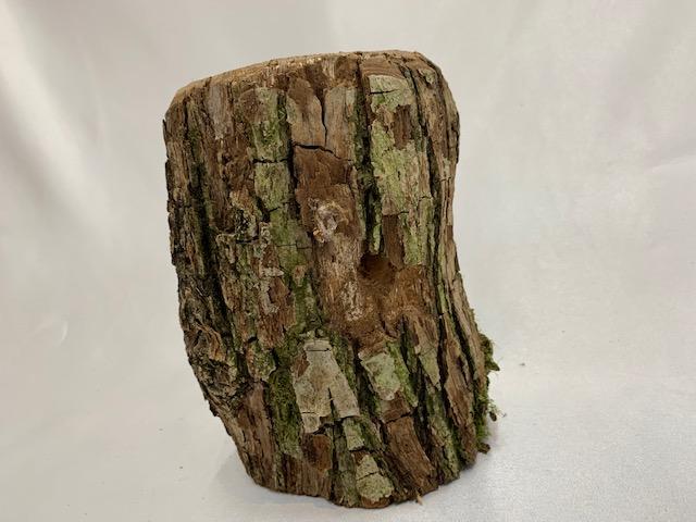 c-wood-L-7171748