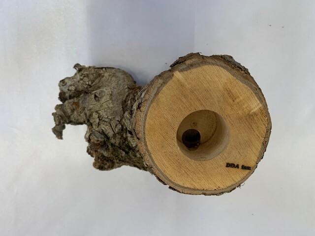 c-wood-L-8051459