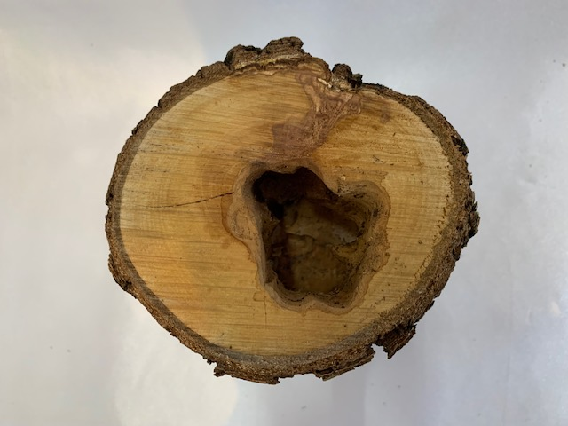 c-wood-L-10051601